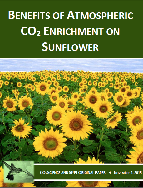 agricultural_species_sunflower